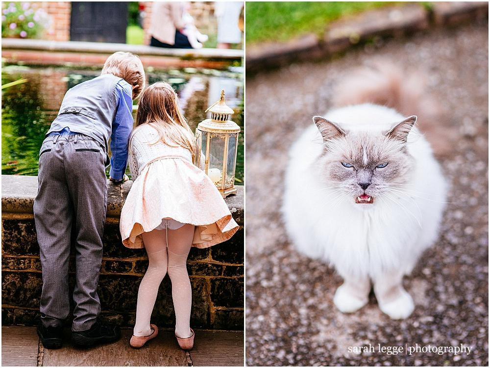 Miaowing cat at wedding