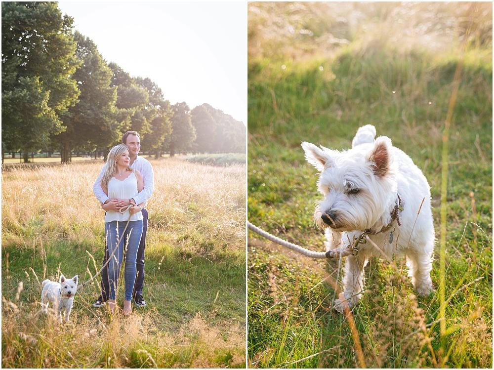 Westland terrier
