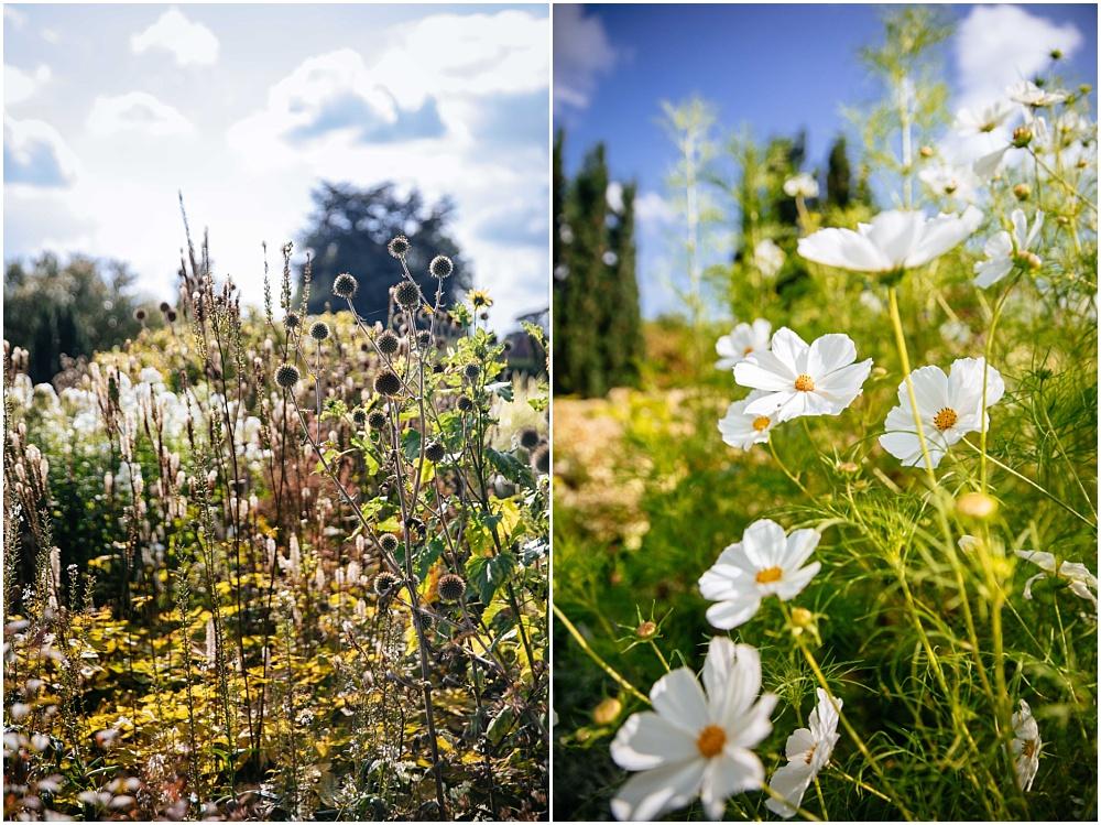 Wild flowers in loseley park