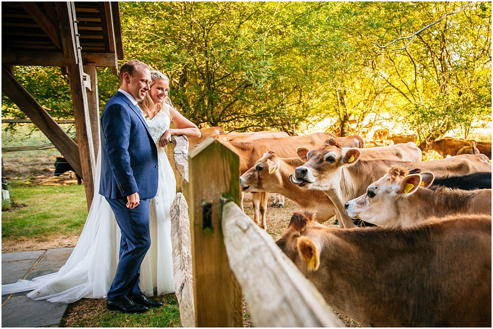 Golden hour portraits with cows